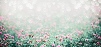 Amazing nature background with meadow of blooming clover Royalty Free Stock Photo