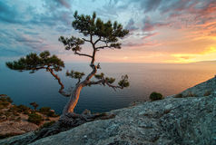 Amazing nature of Crimea, Ukraine: sea, rocks and pines. Beautiful sunset under the sea. Rocks and Pine tree. Crimea, Ukraine. Black sea royalty free stock photos