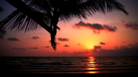 Cinematic footage: Amazing sunset over the tropical beach. Amazing nature landscape: Silhouette palm tree on background sunset over the tropical beach stock video footage