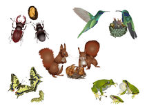 Amazing nature set - animal family. It is illustration of several animals with his offspring Royalty Free Stock Photo
