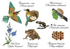 Amazing nature set - European animals Royalty Free Stock Photography