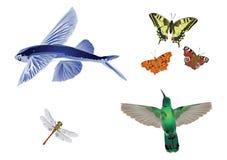 Amazing nature set - In flight Stock Image