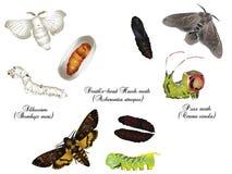 Amazing nature set - moths Stock Photography