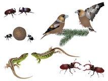 Amazing nature set - rivals. It is illustration of amazing animals rivals Stock Photography