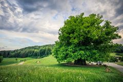 Amazing old linden tree under spectacular sky in linn aargau hdr stock photography