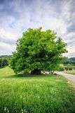 Amazing old linden tree under spectacular sky in linn aargau hdr royalty free stock images