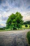 Amazing old linden tree under spectacular sky in linn aargau hdr royalty free stock photo