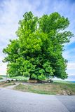 Amazing old linden tree under spectacular sky in linn aargau hdr royalty free stock image