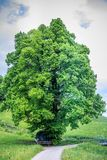 Amazing old linden tree under spectacular sky royalty free stock images
