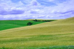 Amazing organic nature : wheat fields in Italy stock photography