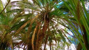 Amazing palm with blue skies Stock Image