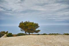 Amazing Panorama with tree at Zakynthos island Stock Image