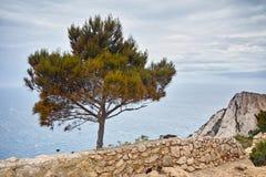 Amazing Panorama with tree at Zakynthos island Royalty Free Stock Images