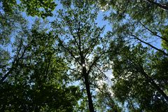 Amazing panorama view of bright sun beam shining through the branch of tree stock images