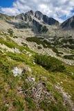 Amazing panorama of the Yalovarnika peaks in Pirin Mountain Royalty Free Stock Photos