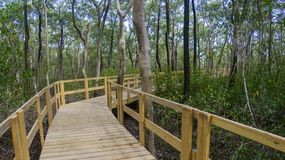 Pathway inside mangrove forest Royalty Free Stock Photo