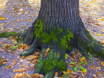 Amazing photo of a tree covered with moss Stock Photography