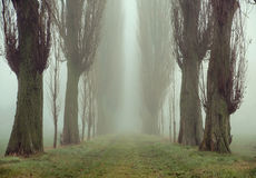 Amazing picture of ancient trees Stock Photography