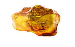 Amazing piece of Baltic Amber with frozen in it ants. stock photos