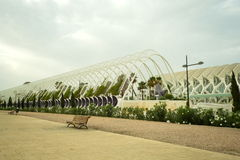 Triangular area of public garden with palm in Valencia Stock Photo