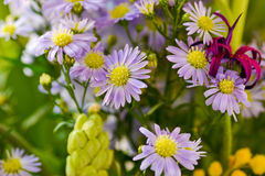 Amazing plain purple flowers Stock Photography