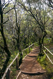 The amazing rain-forest in La Gomera, Stock Photo