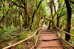 The amazing rain-forest in La Gomera Royalty Free Stock Photo