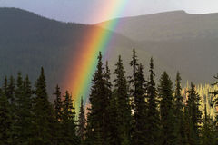 Amazing Rainbow in Pine Forest. A vivid rainbow drops its pot of gold in a Canadian forest Royalty Free Stock Images