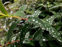 Amazing raindrops on leaves stock photos