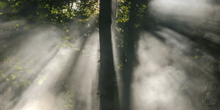 Amazing rays. Sun rays seen through morning mist Royalty Free Stock Photo