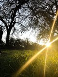 Amazing rays of sun during sunset. The suns rays can be seen in this amazing photograph taken in Modesto California royalty free stock photography