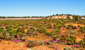 Amazing Red Desert near Kalgoorlie. Desert in Kalgoorlie ...   landscape Western Australia Stock Photos