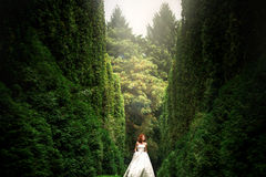 Amazing red-haired bride walks around green. Trees Stock Image