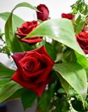 Amazing red roses and art foliage. Red roses flowers bouquet Stock Photo