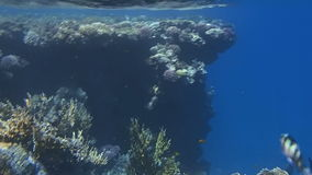 Amazing red sea stock footage