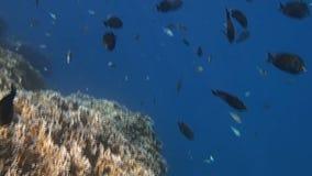 Amazing red sea stock video