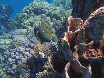 Amazing red sea snorkeling Stock Images