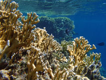 Amazing red sea snorkeling Royalty Free Stock Images