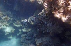 Amazing red sea snorkeling Royalty Free Stock Image