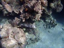 Amazing red sea snorkeling Royalty Free Stock Photos