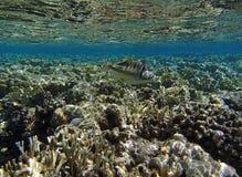 Amazing red sea snorkeling Stock Image