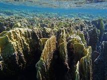 Amazing red sea snorkeling Stock Photos