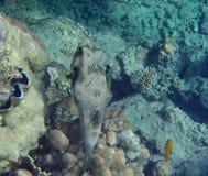 Amazing red sea snorkeling Stock Photo