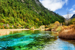 Amazing river with azure crystal water among evergreen woods Stock Photos