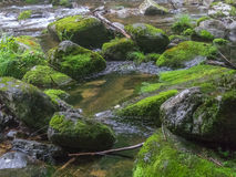 Amazing river in deep forest landscape. Stock Photo