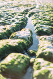 Amazing row of eroded white stones at low tide, Etretat, Normandy, France Royalty Free Stock Photography