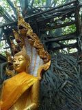 Amazing Ruins of Buddhist Temple stock photography