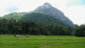 The rural landscape of the central part of Sri Lanka royalty free stock images