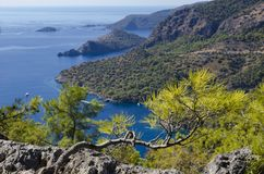 Amazing sea view in the area of Oludeniz beach. From the top we see the blue surface of the sea and the blue lagoon. In the foreground of a tree branch Royalty Free Stock Image