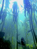 Fish Tank at the Two Oceans Aquarium royalty free stock photos